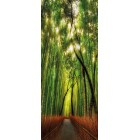 Deursticker Bamboe bos