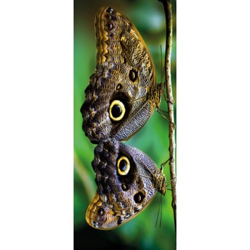 Deursticker 2 vlinders