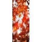 Deursticker Herfstbladeren