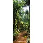 Deursticker oerwoud trap